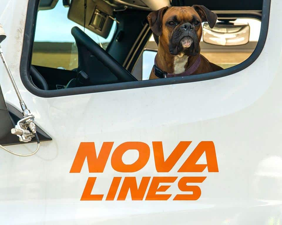 Brown boxer dog looking out an open window in a Nova Lines semi truck.